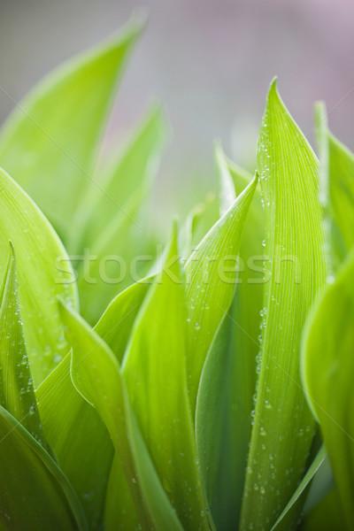 Pluie gouttes accent fraîches vert Photo stock © Gbuglok