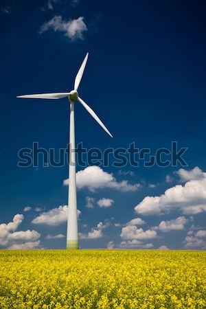 Molino de viento violación campo amarillo primavera temporada Foto stock © Gbuglok