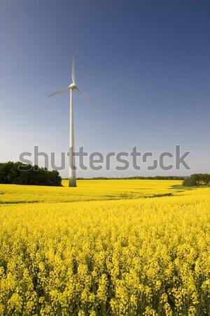 Moulin à vent sorcière viol domaine jaune printemps Photo stock © Gbuglok