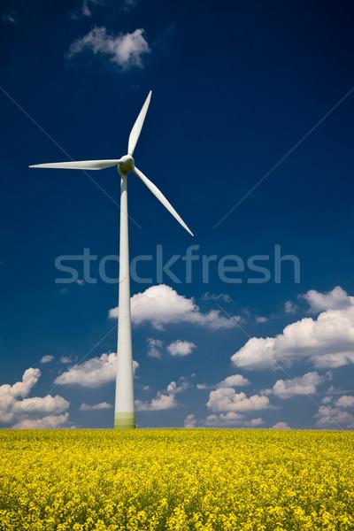 Windmühle Vergewaltigung Bereich gelb blauer Himmel Himmel Stock foto © Gbuglok