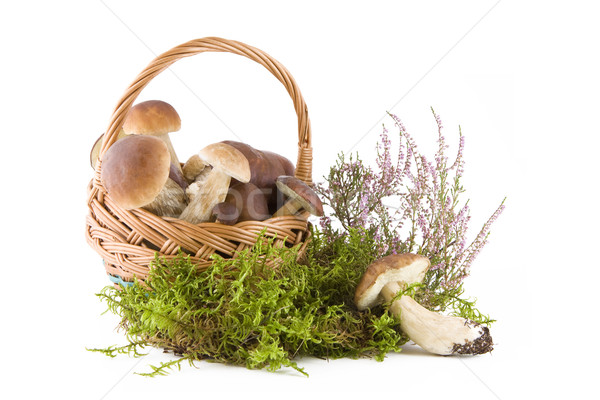 Paddestoel champignons mand groene mos Stockfoto © Gbuglok