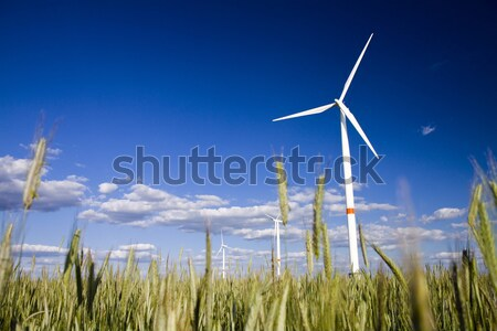 Veld rogge Blauw zonnige hemel wolken Stockfoto © Gbuglok