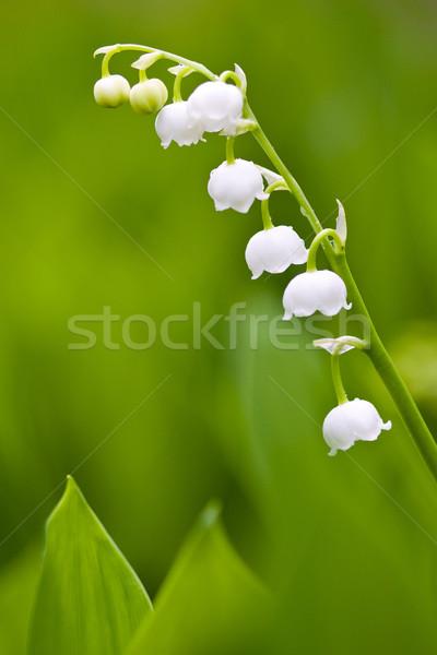 小 ユリ 白 花 緑 庭園 ストックフォト © Gbuglok