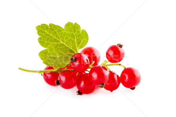 Red currants isolated on white Stock photo © Gbuglok