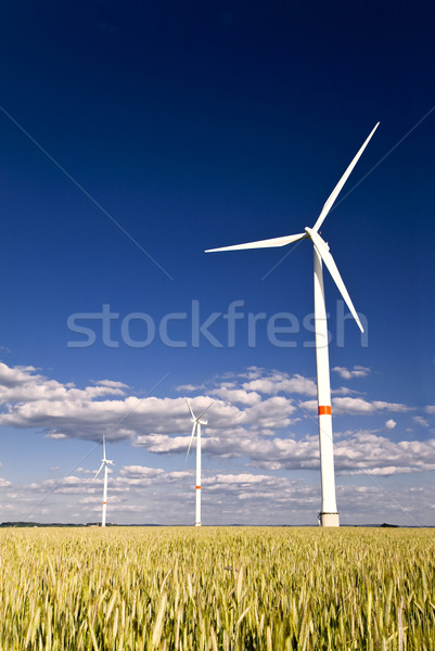 Windmills in a field of rye Stock photo © Gbuglok