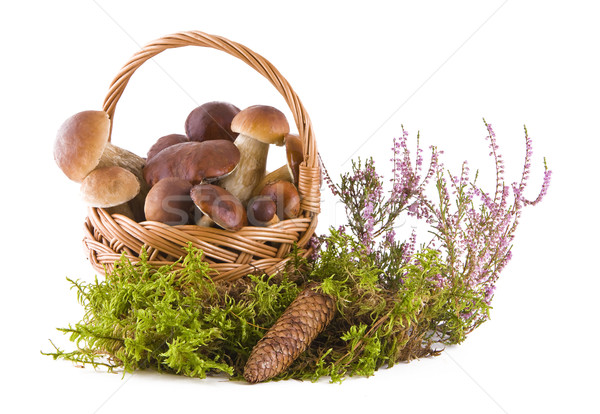 Boletus mushrooms in the basket Stock photo © Gbuglok