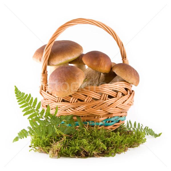 Cogumelos cesta fresco verde musgo Foto stock © Gbuglok