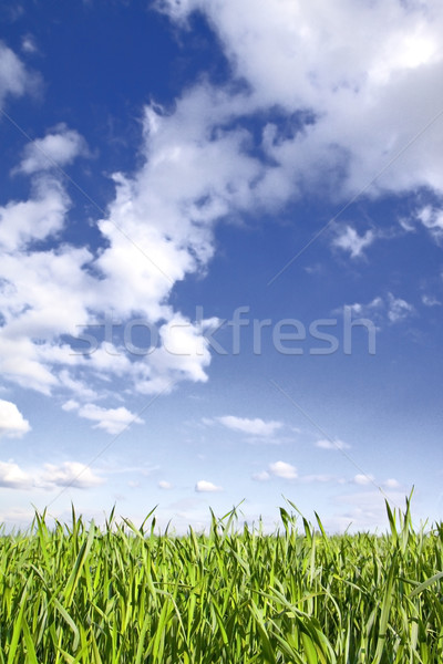 Green grass, blue sky Stock photo © Gbuglok