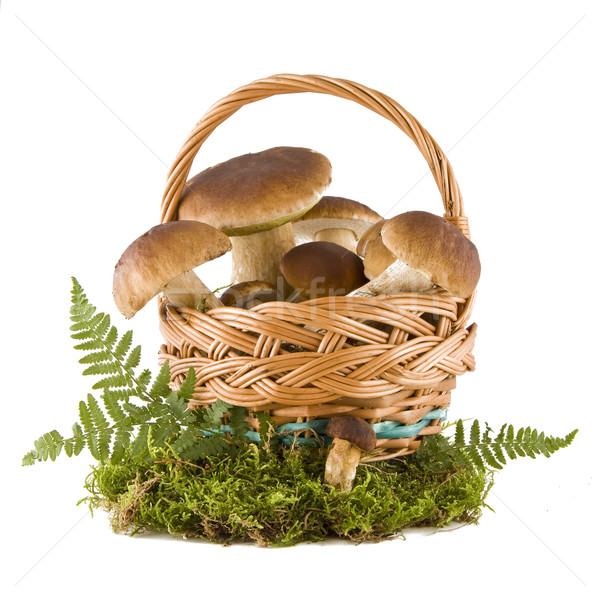 ストックフォト: ヤマドリタケ属の食菌 · キノコ · バスケット · 緑 · 苔