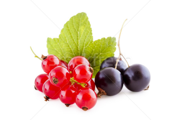 Red and black currants on white Stock photo © Gbuglok