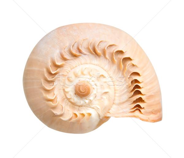 sea shell Stock photo © GekaSkr