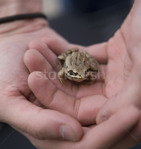 Stock photo: Trapped Frog