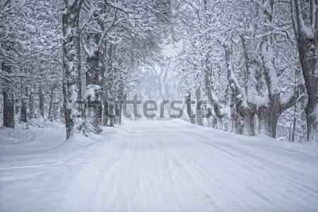 冬 道路 未舗装の道路 ツリー 森林 自然 ストックフォト © gemenacom