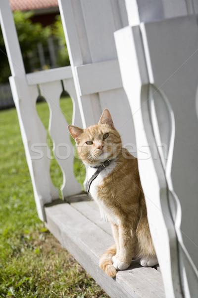 Gato doméstico sesión banco animales mascotas fotografía Foto stock © gemenacom