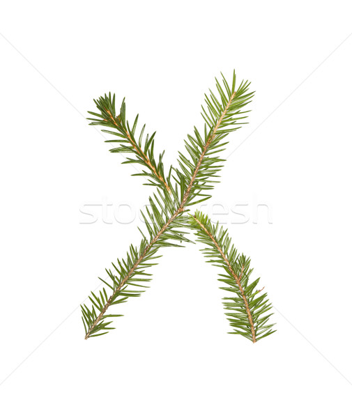 Spruce twigs forming the letter 'X' Stock photo © gemenacom