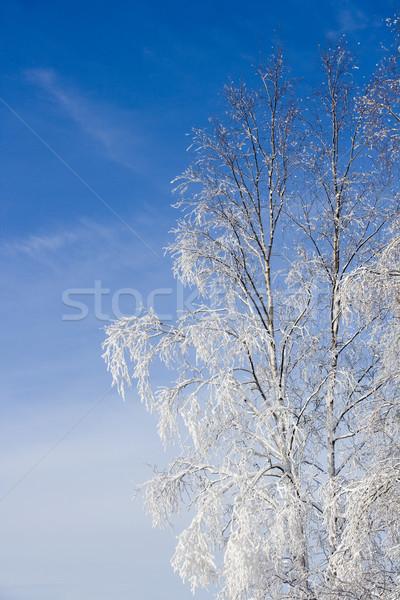 Winter tree Stock photo © gemenacom