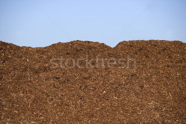 Bark Stock photo © gemenacom