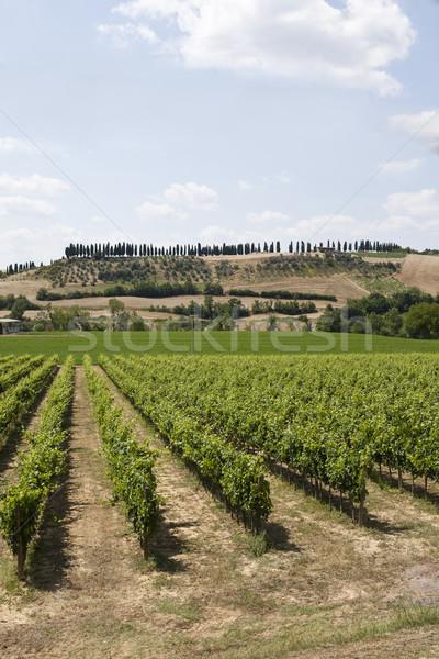 Ver natureza planta uva europa agricultura Foto stock © gemenacom