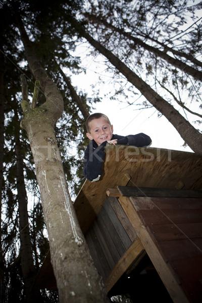 Capanna guardando fuori top albero Foto d'archivio © gemenacom