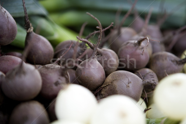 Root Beats Stock photo © gemenacom
