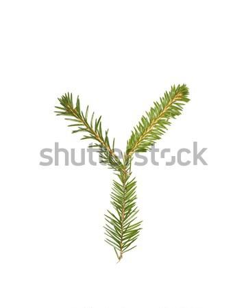Abete rosso lettera isolato bianco albero inverno Foto d'archivio © gemenacom