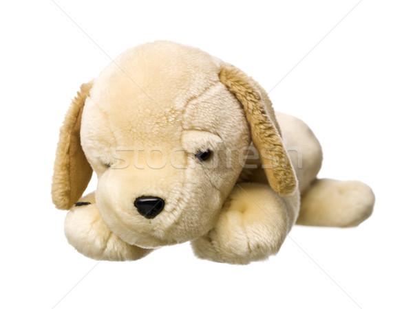 Cachorro de brinquedo isolado branco cão amor brinquedo Foto stock © gemenacom