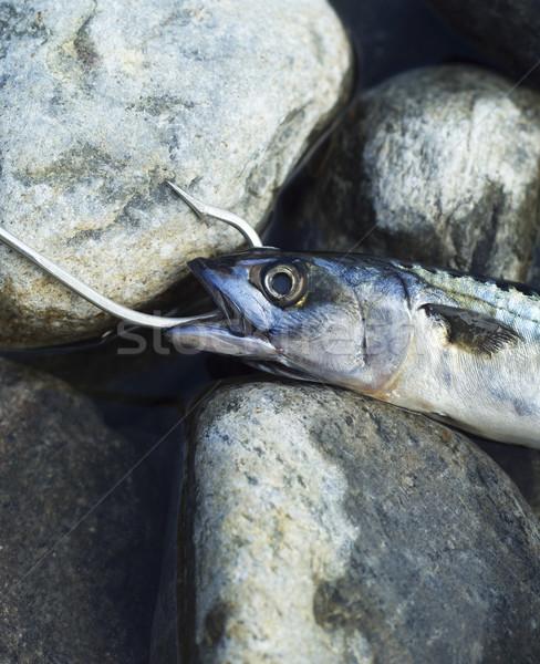 Balık taş kaya balık tutma açık havada Stok fotoğraf © gemenacom