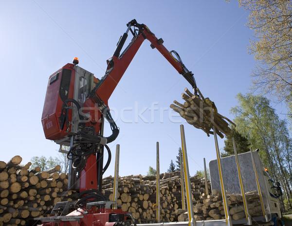 Buenos Aires erdő fa út fa természet Stock fotó © gemenacom