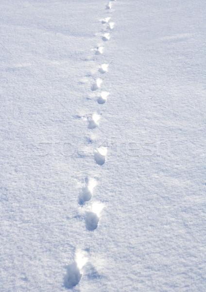 足跡 雪 フルフレーム 冬 ストックフォト © gemenacom