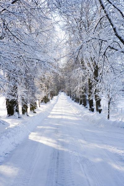 Kış manzara geçit güzel gün orman Stok fotoğraf © gemenacom