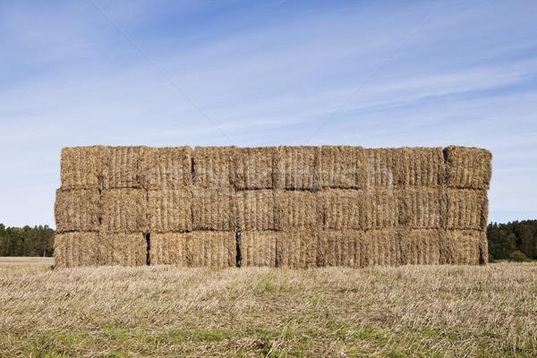 Baal hooiberg hemel voedsel gras Stockfoto © gemenacom