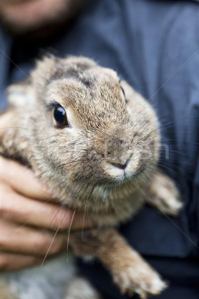 Rabbit Front view Stock photo © gemenacom