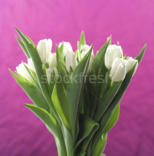 White tulips Stock photo © gemenacom