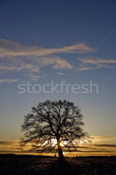 Drzewo zachód słońca niebo słońce zimą Chmura Zdjęcia stock © gemenacom
