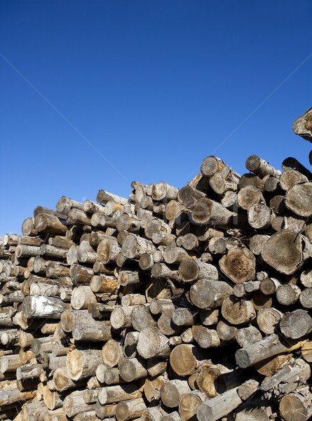 Timber Stock photo © gemenacom