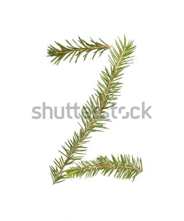 Fichte isoliert weiß Baum Winter Stock foto © gemenacom