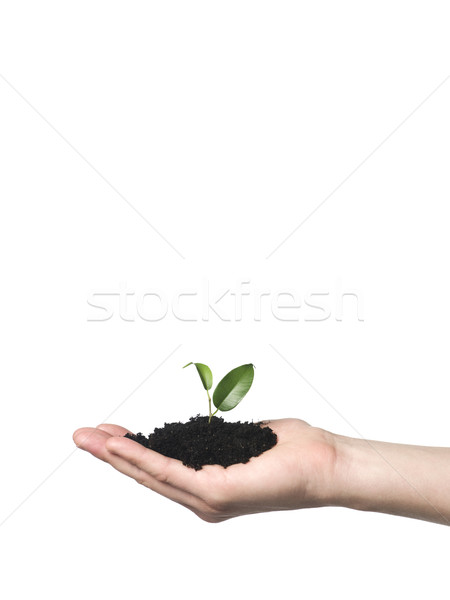 Hand with a growing plant Stock photo © gemenacom