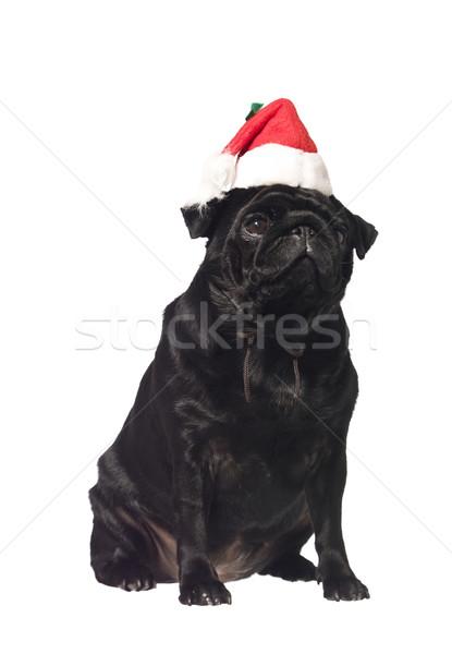 黒 サンタクロース 帽子 孤立した 白 赤 ストックフォト © gemenacom