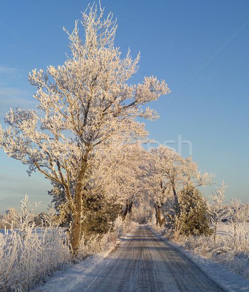зима пейзаж Blue Sky лес природы снега Сток-фото © gemenacom
