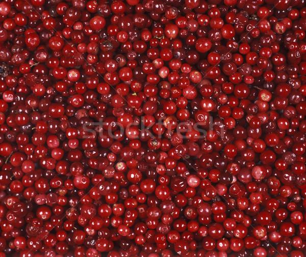 Lingonberries Stock photo © gemenacom