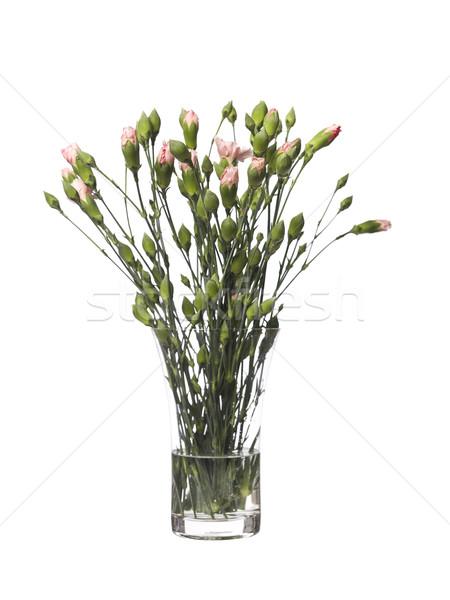 Vase of Carnations isolated towards white background Stock photo © gemenacom