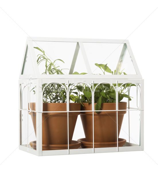 Houseplants Stock photo © gemenacom