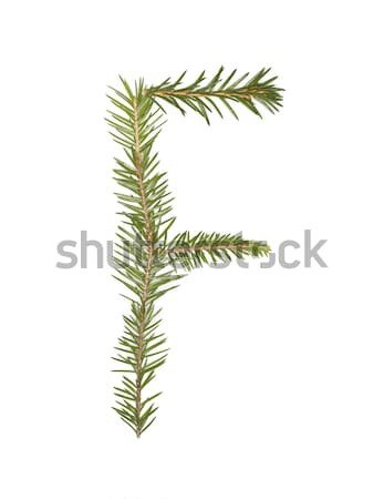 Spruce twigs forming the letter 'F' Stock photo © gemenacom