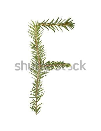ель буква f изолированный белый дерево зима Сток-фото © gemenacom