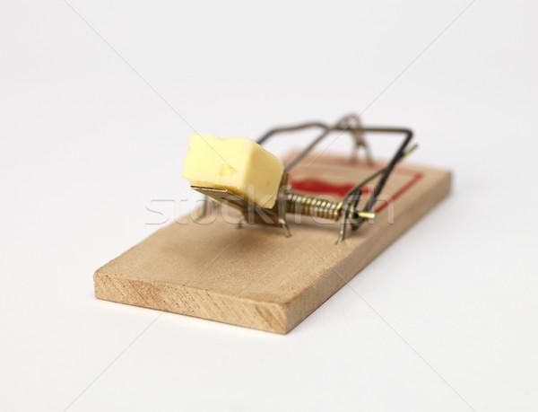 мыши ловушка сыра белый фотографии Сток-фото © gemenacom
