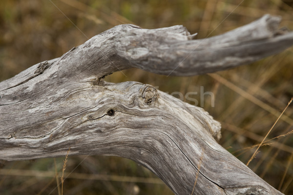 Close up of a branch Stock photo © gemenacom
