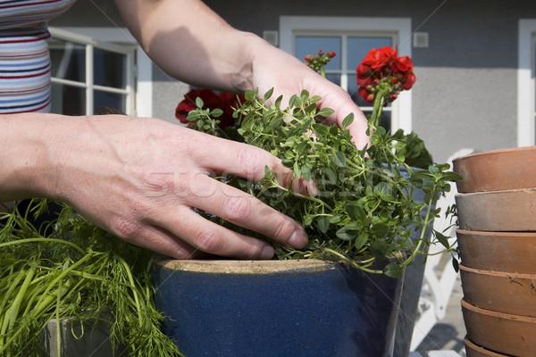 Bahçıvanlık çalışmak kir kirli fotoğrafçılık Stok fotoğraf © gemenacom