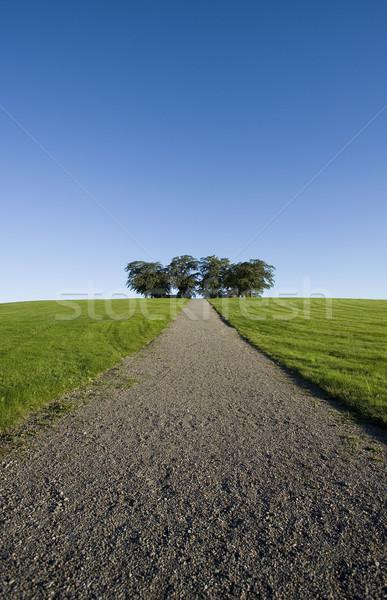 パノラマ シーン 未舗装の道路 路地 空 ツリー ストックフォト © gemenacom