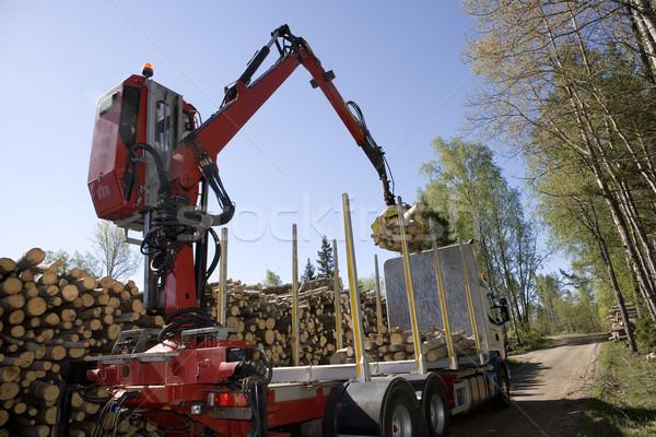 Legno foresta albero strada legno natura Foto d'archivio © gemenacom