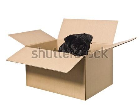 Man in a cardboard box. Stock photo © gemenacom